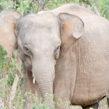 safari allo Udawalawe National Park in Sri Lanka