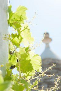Trulli di charme in Valle d'Itria